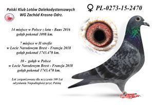 Arkadiusz Śmieszkowicz  tel. 603 509 482